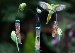 Illegal immigrants exploiting the generosity of Britain's birdlovers (photo via