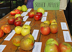 sussex-apples-via-welovebrighton-com